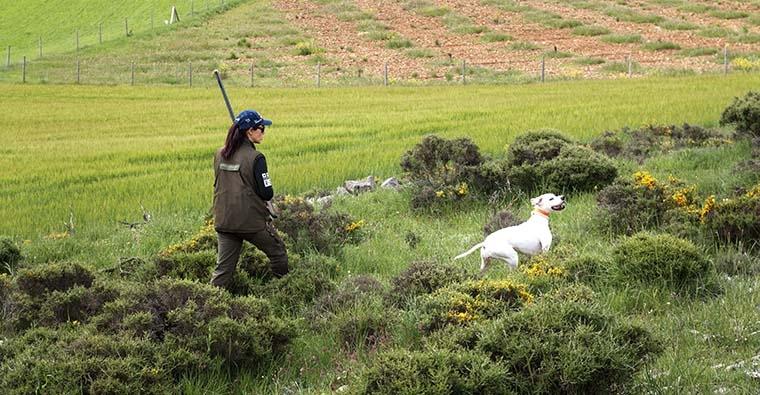 <h2 class='tahoma bold texto20 c_c0202e'><a href='http://www.frdcaza.org/noticia/227/Campeonato-Espaa-Caza-Huberto' class='c_c0202e'>Campeonato de España de Caza San Huberto</a></h2><p class='tahoma c_454545 texto12 margin0'>En terrenos de A Capela y As Pontes de García Rodriguez, en A Coruña, se celebrará, los días 15 y 16, el XXXVII Campeonato de España de caza San Huberto.</p><a href='http://www.frdcaza.org/noticia/227/Campeonato-Espaa-Caza-Huberto' class='tahoma c_454545 texto12'>Seguir leyendo></a>