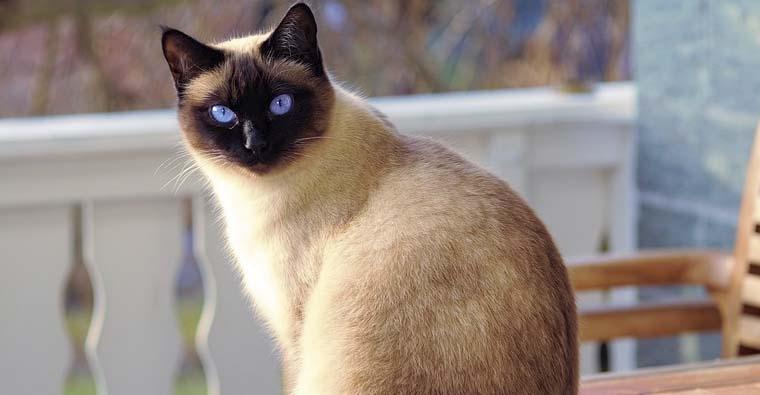 <h2 class='tahoma bold texto20 c_c0202e'><a href='http://www.frdcaza.org/noticia/249/Reglamento-regulador-de-la-identificacion-de-los-animales-de-compania' class='c_c0202e'>Reglamento regulador de la identificación de los animales de compañía</a></h2><p class='tahoma c_454545 texto12 margin0'>El Decreto 61/2004, de 3 de diciembre, por el que se aprueba el reglamento regulador de identificación de los animales de compañía en la Comunidad Autónoma de La Rioja, que da modificado del modo siguiente:</p><a href='http://www.frdcaza.org/noticia/249/Reglamento-regulador-de-la-identificacion-de-los-animales-de-compania' class='tahoma c_454545 texto12'>Seguir leyendo></a>